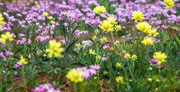 Wild Flower Tours