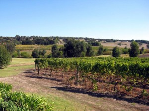 margaret-river-vineyard-16702